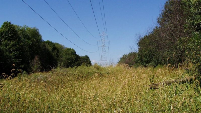 an uncleared right-of-way with power transmission lines